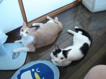 繝ェ繝ウ繧ッ・狙convert_20110823233557