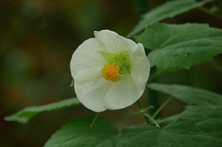 100227-11flower2.jpg