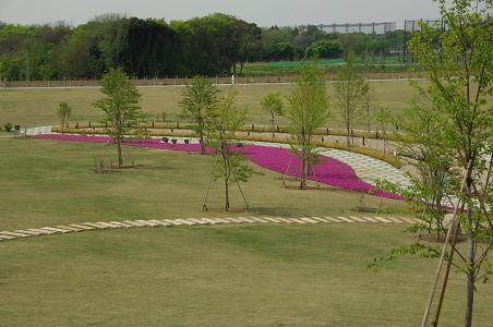 100503-10shibazakura2.jpg