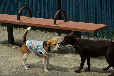 100504-09cookydog1.jpg
