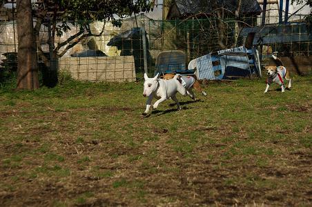 100206-07kintaro,characooky run