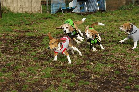 100214-08sumomo,charie,browncooky