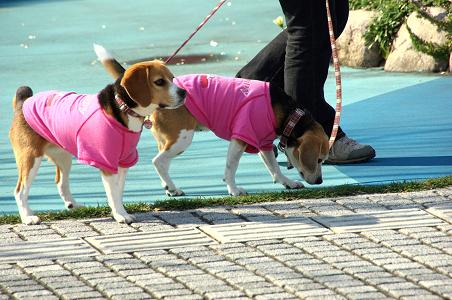 100417-07cookychara walk on yokohama bayside