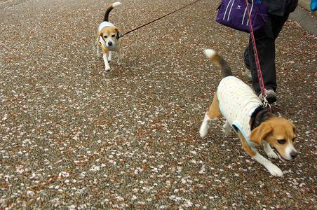 100424-03cookychara walk on sagamihara
