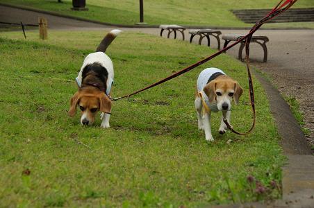 100424-11characooky walk on park