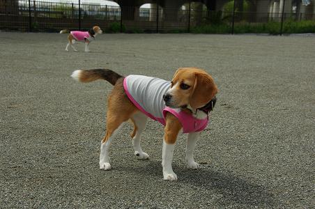 100429-03chara in shounan dog park