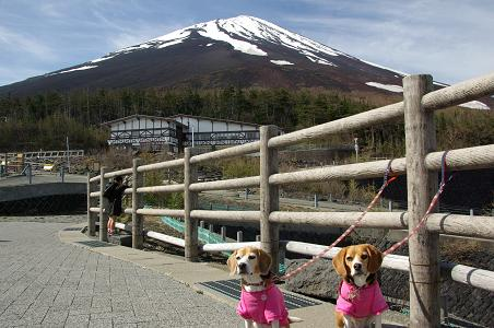 100522A02cookychara in Mt.fuji