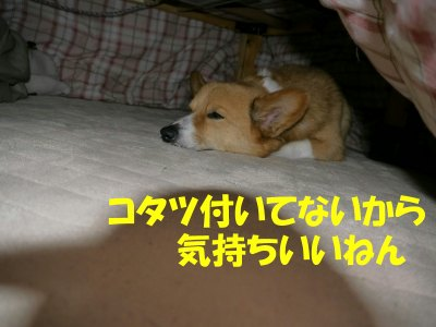 s-2010.05.29 001 (12)