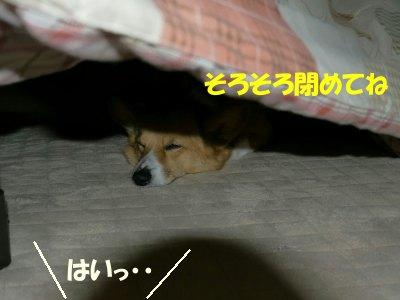 s-2010.05.29 001 (8)