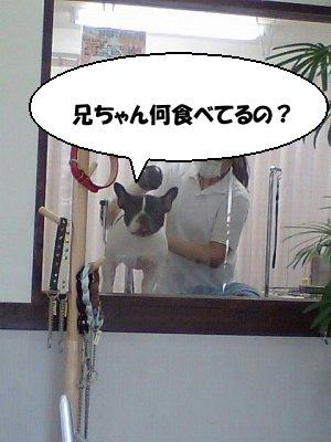 s-シャンプー (5)