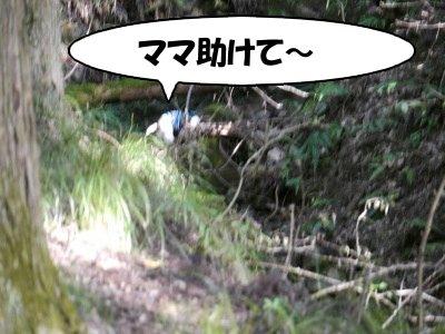 川遊び (13)