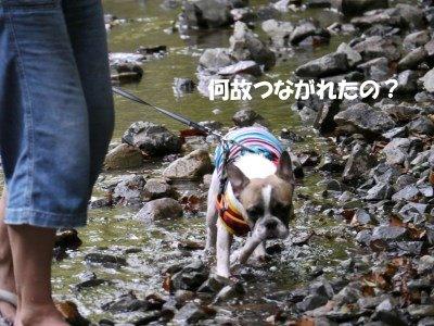 川遊び (10)