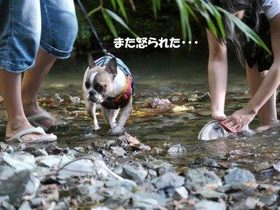 川遊び (16)