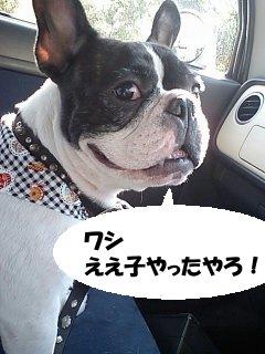 シャンプーへ (2)