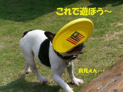 BOWWOWへ (1)