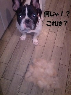 これは? (1)