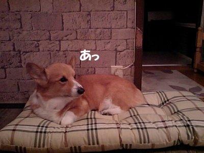新しいベッド (1)
