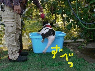 最後の水浴び (5)