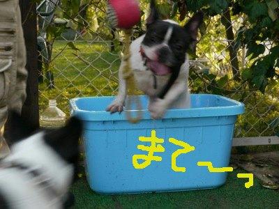最後の水浴び (7)
