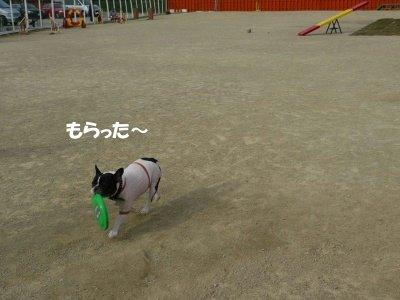 レンちゃん (4)