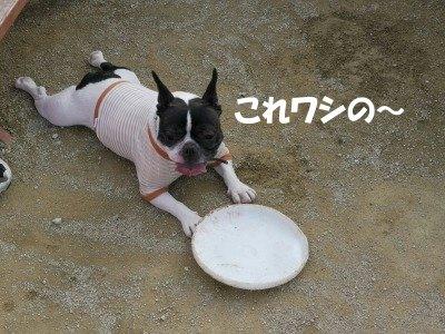 レンちゃん (6)