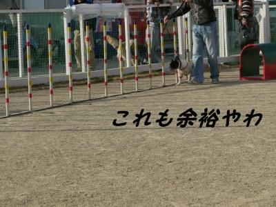 ワンふれんず (5)