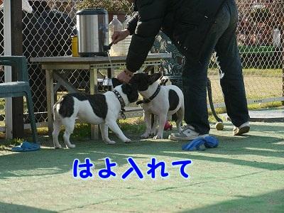 かぶりもの (6)