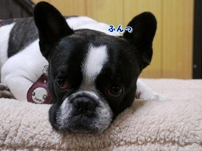 シャンプー中 (6)