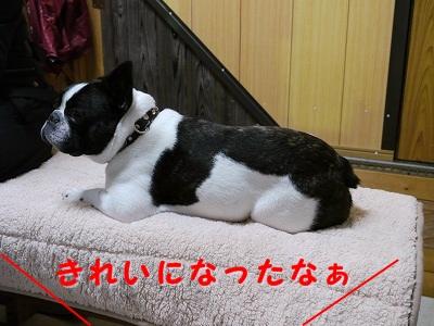 シャンプー中 (5)