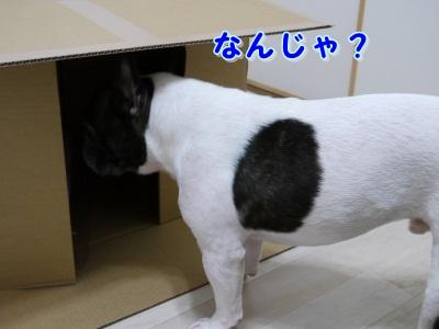 なんじゃ? (1)