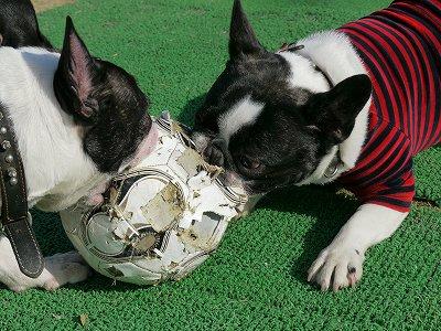 サッカーボールが (3)