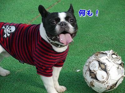 サッカーボールが (8)