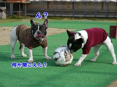 サッカーボールが (7)