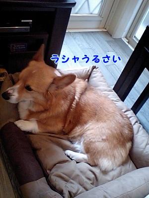 わがまま (4)