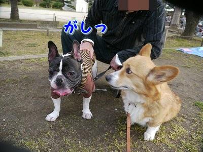 初めてのお花見 (6)