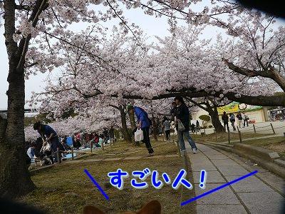 初めてのお花見 (2)