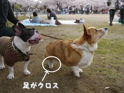 初めてのお花見 (8)