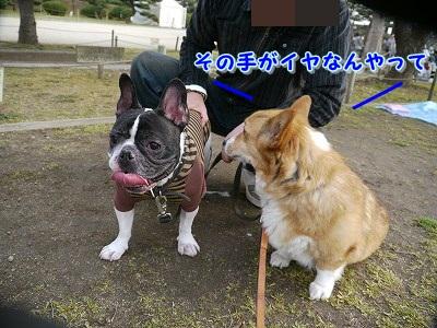 初めてのお花見 (7)