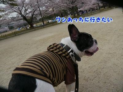 春 (1)