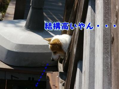えて吉くん (5)