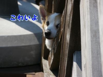 えて吉くん (6)
