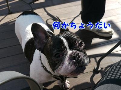 えて吉くん (4)