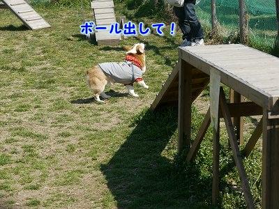 えて吉くん (1)