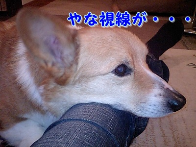 ソファの上 (5)
