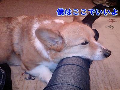 ソファの上 (3)