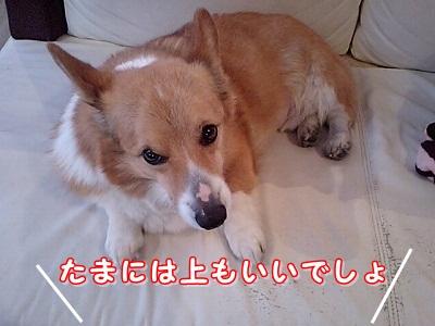 ソファの上 (1)