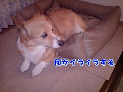 怒ってる (1)