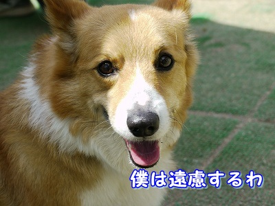 大型犬好き (2)