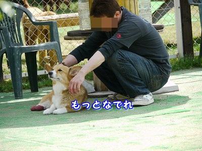 大型犬好き (3)