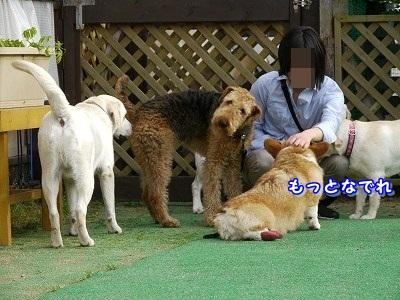 大型犬好き (8)